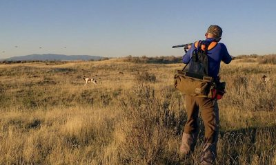 Sport of Hunting, Rifles