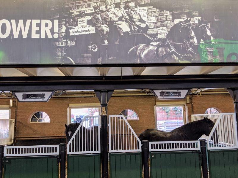 Heineken Horses