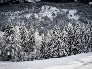 Beerman: Snowy forest