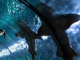 shark-473014_1280